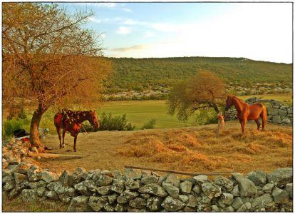 Blaca - istinska oaza mira i tišine...
