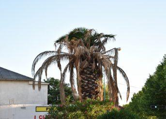 Komunalci uredite naše i vaše palme