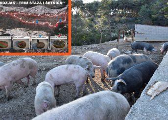 NEÅTO A NE NIÅTA, rad a ne nerad, turizam a ne svinjogojstvo…