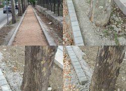Gradnja nove šetnice u Radićevoj – Hoće li stabla ostati zabetonirana?