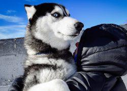 Fotogalerija: Najduža utrka psećih zaprega na svijetu održava se upravo sada na Kamčatki