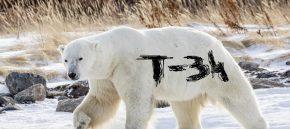 """Ruskom se tundrom kreće bijeli medvjed na čijem je krznu netko napisao """"T-34"""" (VIDEO)"""