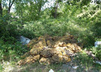 Kamion usmrđenih krumpira na Širini uz riku Jadro