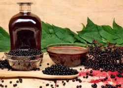 Lijek od bobica bazge: Domaći recept koji pobjeđuje viruse i zatvor