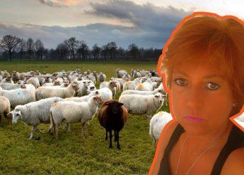 Crne i bijele ovce u žrvnju sustava