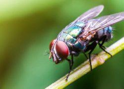 Obavijest o izvođenju radova dezinsekcije muha